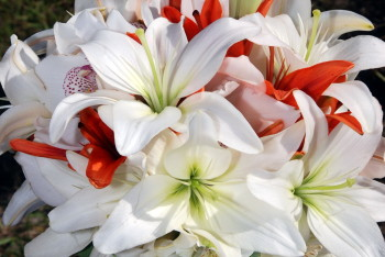 bridal bouquet gulf coast beach wedding